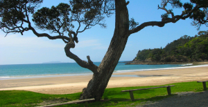 tutukaka-coast-beaches